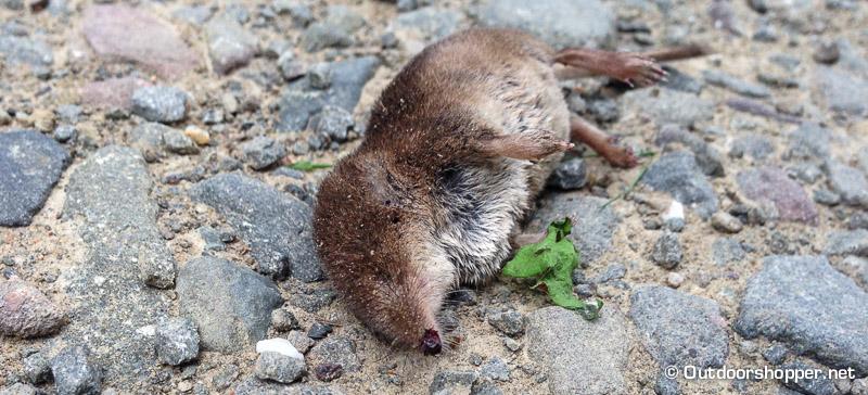 """…für diese Maus kam nach einem """"Astschlag"""" vermutlich jede Hilfe zu spät. :("""
