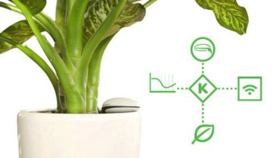 WiFi-Pflanzensensor