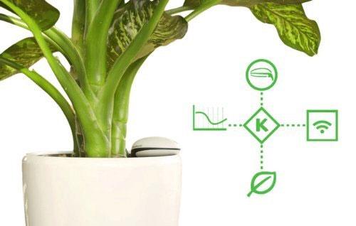 koubachi wifi pflanzensensor ersetzt den gr nen daumen. Black Bedroom Furniture Sets. Home Design Ideas