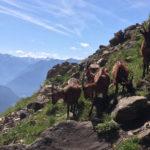 Schöne Gedichte über Berge – nicht nur für Bergsteiger