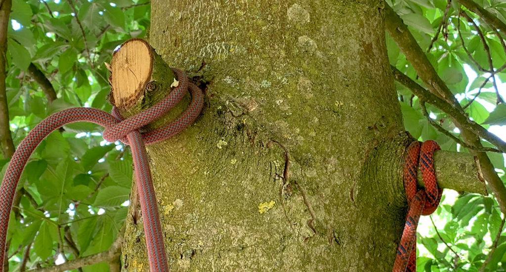 Auch wenn ein Kletterseil durch die Seildehnung nicht die beste Wahl ist, so kann man es trotzdem an einem Aststumpf befestigen, ohne den Baumstamm selbst zu verletzen (Foto: JK).