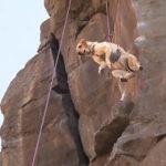 Ruffwear DoubleBack Harness: Hundegeschirr zum Abseilen