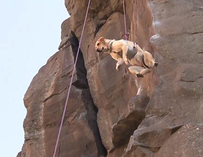Klettergurt Abseilen : Weiblichen rock climber mit sicherungsseil und klettergurt auf