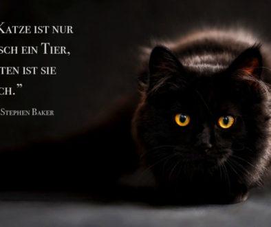 göttliche Katze – ein Zitat