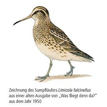 Vogelbeobachtung im Herbst
